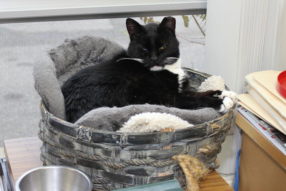 felv feline leukemia virus fiv feline immunodeficiency virus faq s echo hollow. Black Bedroom Furniture Sets. Home Design Ideas